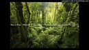 Wow Flute Welcome To The Jungle Mario Ochoa X LeslyG ClubMix EDIT