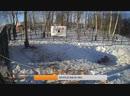 Прямая трансляция медведя Мансура во ВКонтакте Круглосуточная трансляция и все видео на канале Мансура