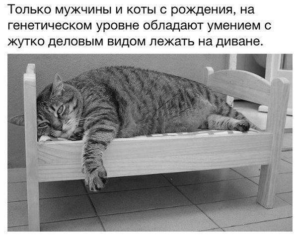 https://pp.vk.me/c635101/v635101275/30b1/IYbb0LVCv30.jpg