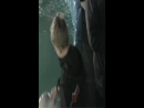 Дельфины и санька