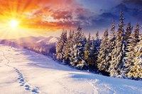 """Схема вышивки  """"в лесу зимой """" ."""