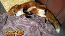 Happy Cutie Foxy ^.^