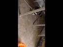 Котёнок и робот пылесос