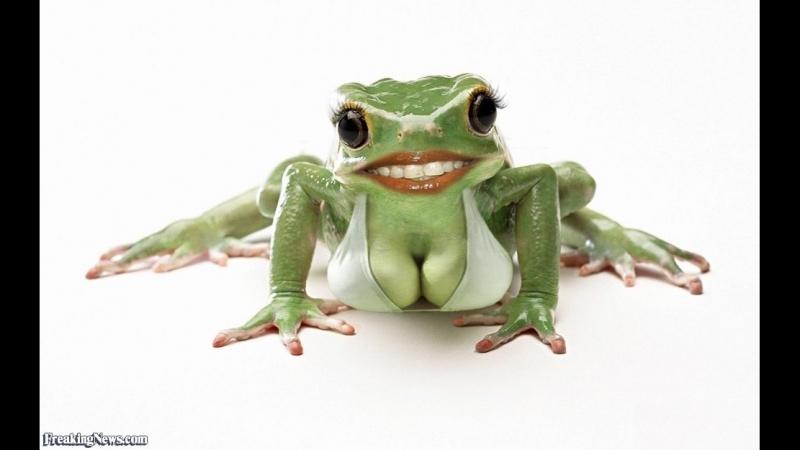 Чтобы жена всегда была довольной, надо быть ласковым (тренируемся с детства на жабе).