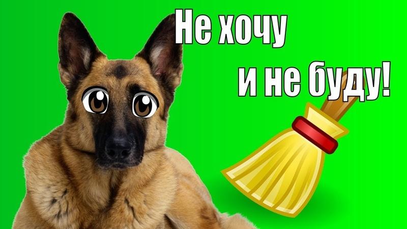 Альвина не хочет убираться Гоняемся за собакой