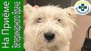 Собака трясет ушами. Воспаление в ушах у собаки
