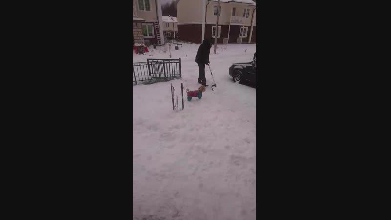 наш песик радуется снегу