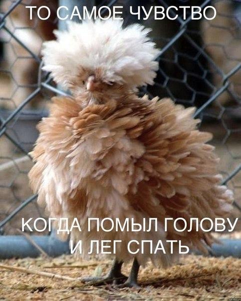 http://cs306102.vk.me/v306102894/26c2/rYuvwNY-g-U.jpg