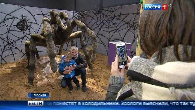 Вести-Москва • Посетители с насекомыми фамилиями в ноябре смогут попасть в Московский зоопарк за полцены