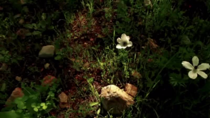 ✿ ♡ ✿ Michel Pépé - Quinta Essentia (Relaxing, soothing music)