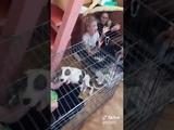 Мать наказала детей посадила детишек в клетки с собаками. Ради хайпа в социальных сетях Тик Ток.