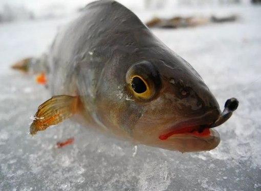 приманки для рыбы с запахом
