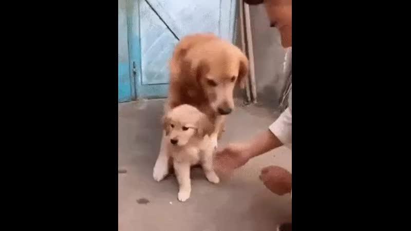 Не отдам своего ребеночка.
