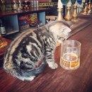 Британский паб The Bag Of Nails — рай для любителей пива и кошек