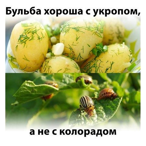 """Саакашвили о коррупции в госаппарате: """"Не может чиновник получать зарплату ниже реального прожиточного минимума"""" - Цензор.НЕТ 3654"""