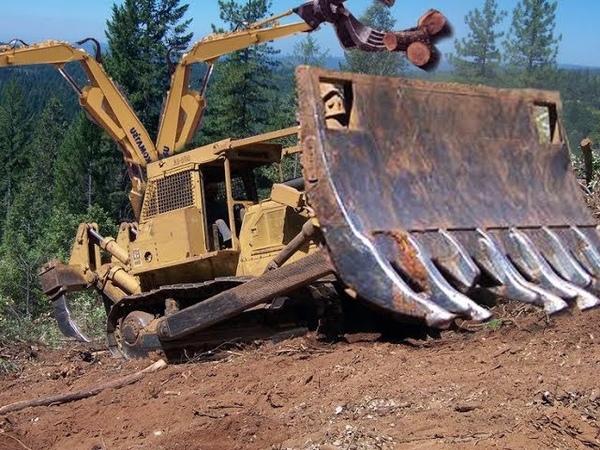 Как это делают? Как выкорчевывают лес.