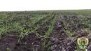 На одну свалку на землях сельхозназначения в Почепском районе стало меньше
