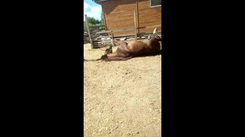 Лошадь Сеня💗