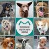 Мелитопольское общество защиты животных