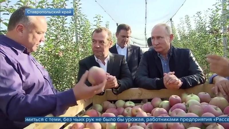 Владимир Путин и Дмитрий Медведев обсудили положение дел в российском сельском хозяйстве.