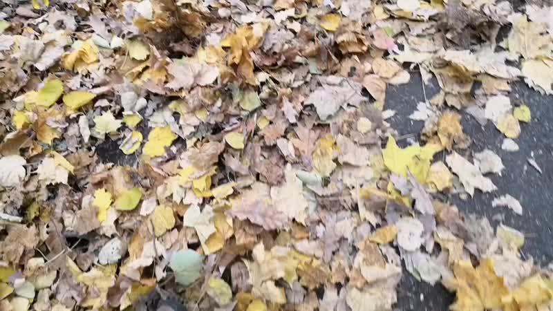 Уходит, шелестя листвою, осень...