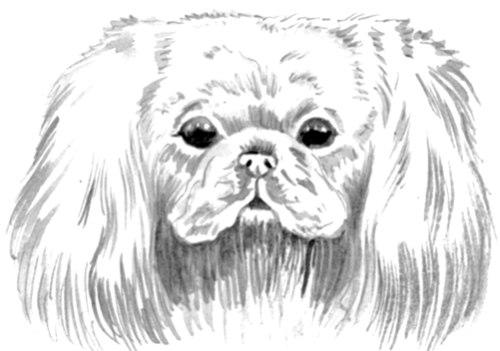Собака н
