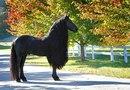 Найден самый красивый конь в мире