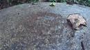 Муравьиный хоровод Round dance of ants Ant circle dance Муравьи ходят по кругу