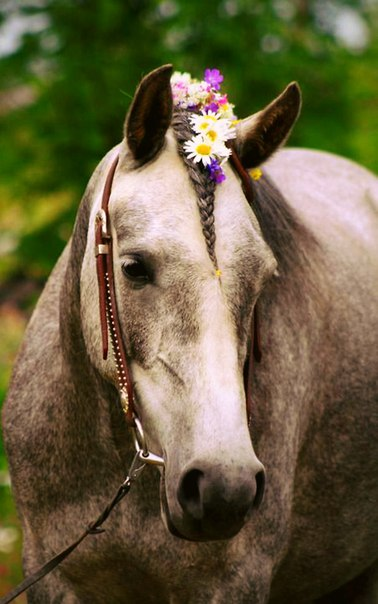 #horse_and_flowers