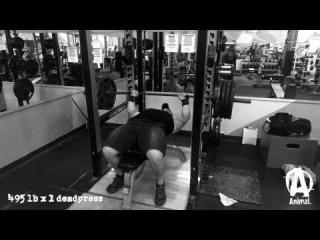 Jeremy  Hoornstra, из команды Animal, жимовая тренировка в рамках подготовки к Raw Unity Meet 7! (30.01.14)
