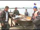 Сома-гиганта поймали на реке Ока у п. Шиморское.