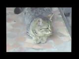 Привет, кошки самые милые создания на планете ;)))