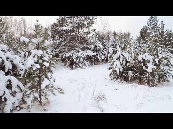 Немного прошлись по лесу Недоvlog xataskrau