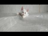Брат Лаврика котёнок Красавчик в добрые руки :-)