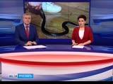 Жителям с. Угодичи, которых в аварийном доме атакуют змеи, Глава посоветовал разводить ежей