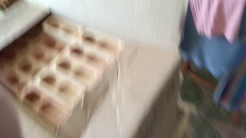 Поездка за пчелами Бакфаст в Чашники (Беларусь) к Василию Крелю. Инженер Андрей.