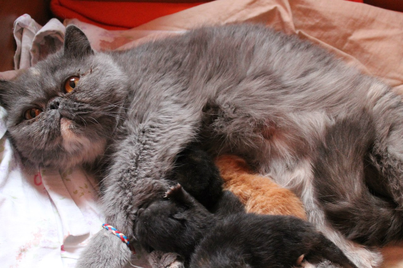 У кошки запор чем можно 91
