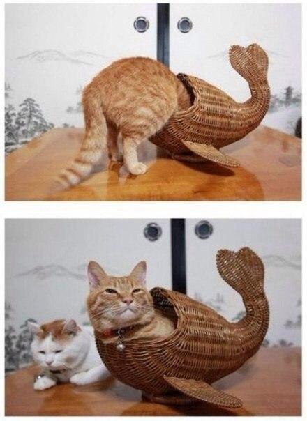 кот-русалка