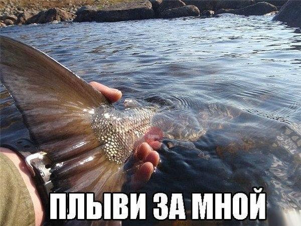 приколы me: