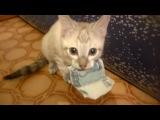 Кот, котик, котёнок, тысяча, вор, прикол, смешно, до слёз, ахаха :)