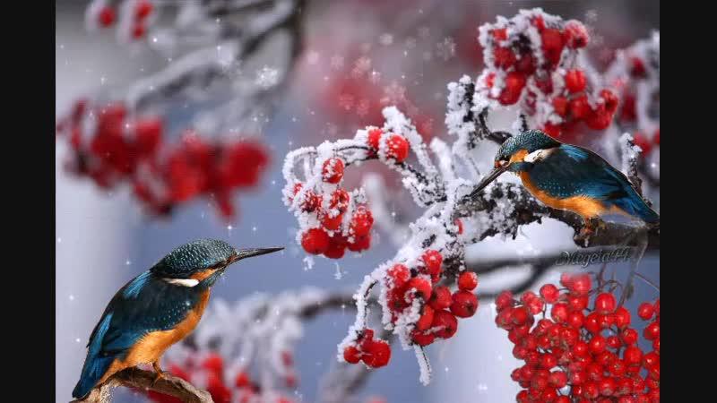 зима и зимородок