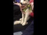 Чудо лисичка - звезда петербургского метро