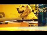 Собака которая любит блюз