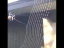 Смотрите, как искусно паук плетет паутину