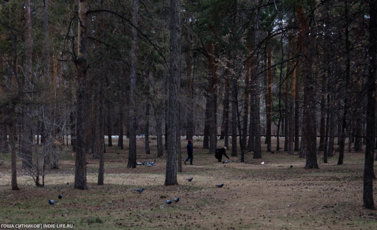 Лес. Парк Гагарина