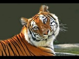 хищники джунглей. тайны дикой природы Индии фильм 2
