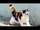 КОТЫ ПРИКОЛЫ 2016 - СМЕШНЫЕ ЖИВОТНЫЕ 2016 - Funny Cats 2016