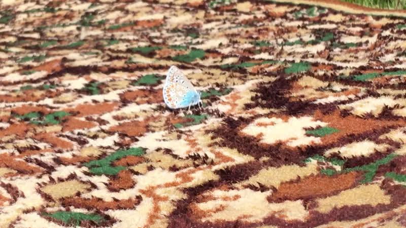 Бабочка на ковре