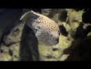 2013-06-01-Aquarium_short