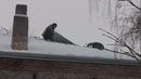 В Серпуховском районе заканчивается ремонт крыш